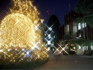 文京キャンパス イルミネーション点灯