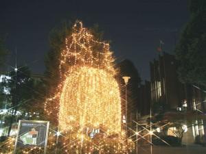 文京キャンパス夜のイルミネーション