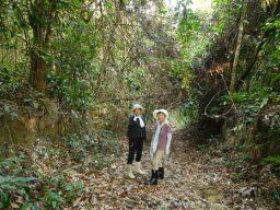農園でもジャングル探検