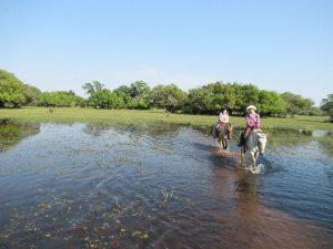 湿地帯を馬で散策